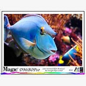 Magic DMIBOP Poster Banner/Wall Covering 11 mil