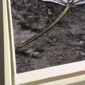 Hahnemuhle Deckle Edge William Turner 310gsm