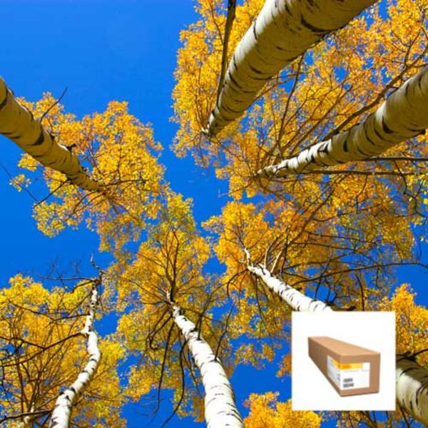 Kodak Universal Self-Adhesive Satin Poly Poster 7 mil