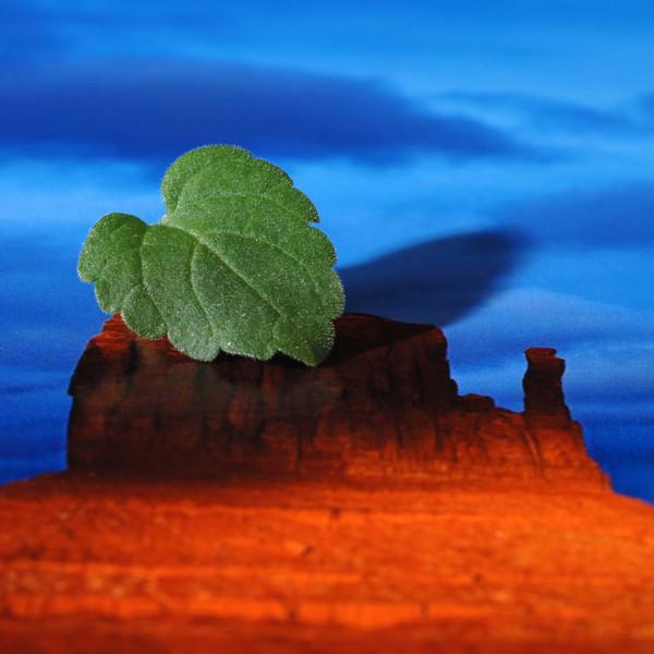 Moab Colorado Fiber Gloss 245 gsm